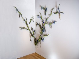 Blue Orchid Tree