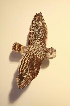 Flying Screech Owl