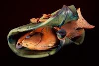 Lau Lau by William Morris